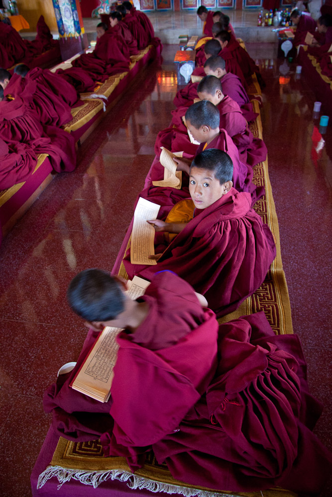 Young monks studying in Buddhist temple -Tawang, Arunachal Pradesh, India